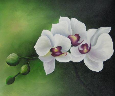 Obraz - Orchidea