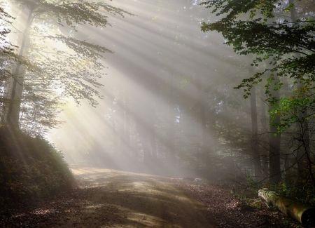 Tištěný obraz - Probuzení lesa
